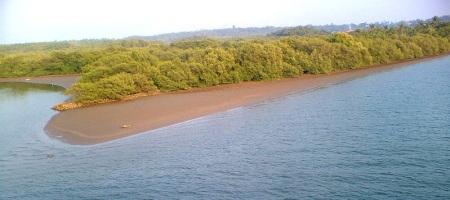 valapatanam_mangrove_forest